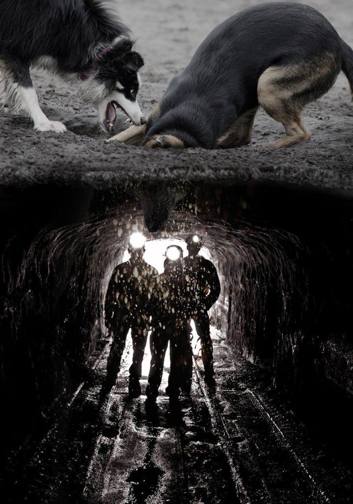 Dogs Digging Mine Funny  - pixundfertig / Pixabay