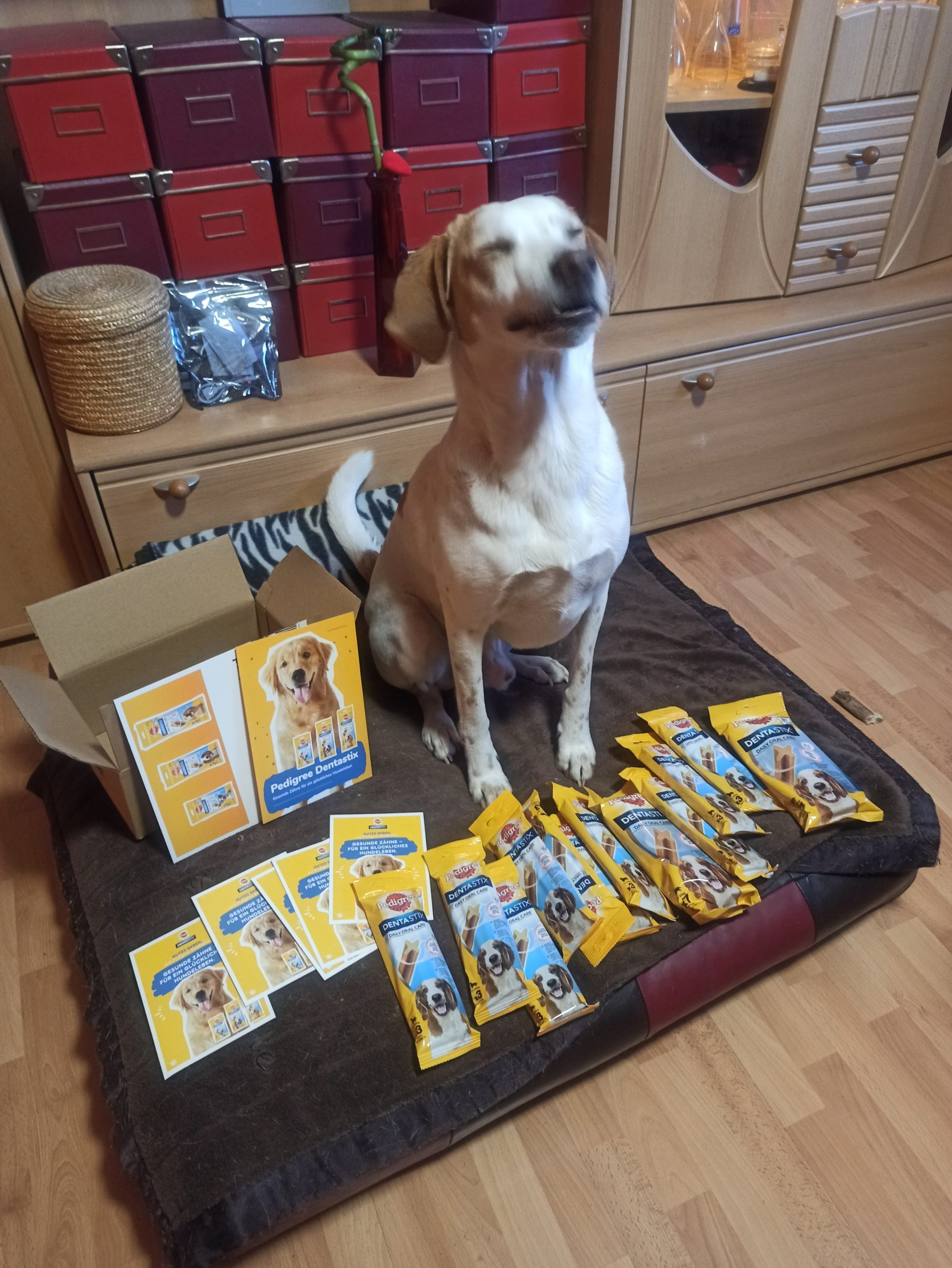 Pedigree Dentastix im trnd-Produkttest